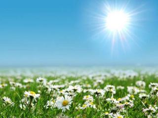 обои Ромашки под ярким солнцем фото