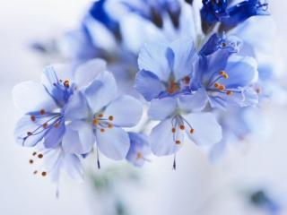 обои Весенние цветочки для души и хорошего настроения фото