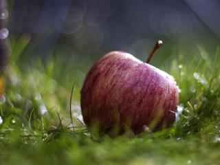 обои Спелое яблоко в траве фото