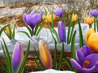обои Снег,   цветы и весна фото