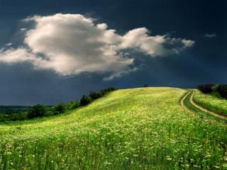 обои Дорога через цветочное поле фото