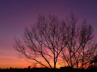 обои Сиреневый закат в весенних деревьях фото