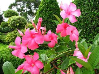 обои Тропический сад фото