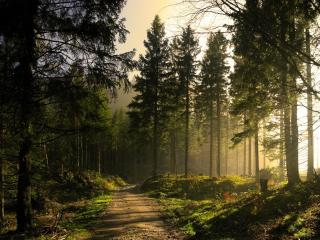 обои Битая дорогa через лес фото