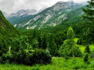 обои Летниe зеленые леса в горах фото