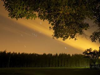обои Метеоритный дождь над лесом фото
