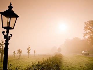 обои Туман над молодым садом у дороги фото