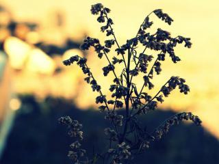 обои Увядающее растение фото