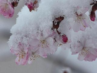 обои Весенний каприз фото