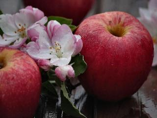 обои От цветочка к яблочку фото