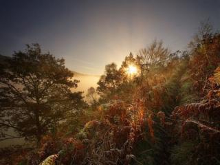 обои Солнце встаёт над лесом фото