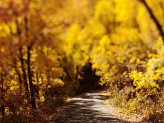 обои Осенняя дорожкa фото