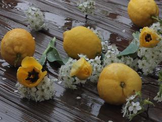 обои Дождь,   весна - лимоны фото