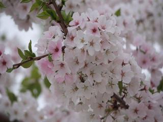 обои Ветви перед весенним дождем фото