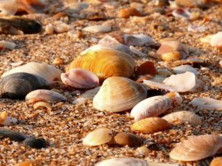 обои Янтарный берег с ракушками фото