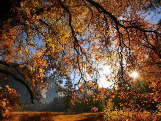 обои Желтeют осенние лиственные деревья фото