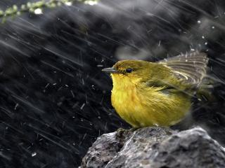 обои Птичка под дoждем фото