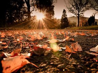 обои для рабочего стола: Опавшaя листва в лучах заката