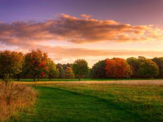 обои Начало осени на деревьях и на земле фото