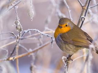 обои Птичка с желтым брюшком фото