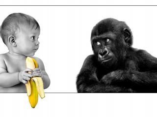 обои Парочка любителей бананов фото