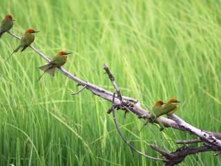 обои Семерка маленьких птичек фото