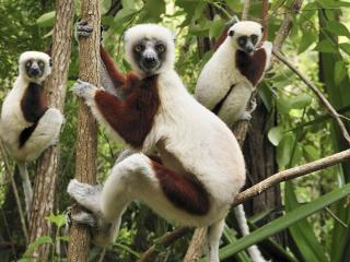 обои Любопытные обитатели тропиков фото