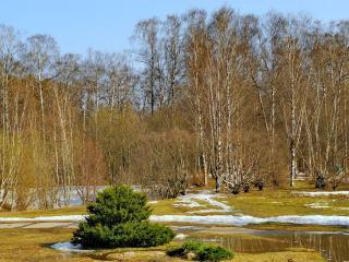 обои Весенние мотивы леса фото