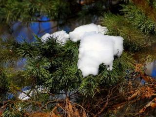обои Еще на ветках снег лежит фото