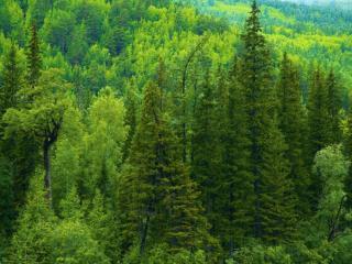 обои Сибирская весна фото