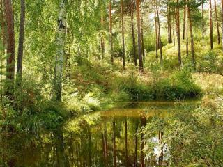 обои Сибирское лето фото