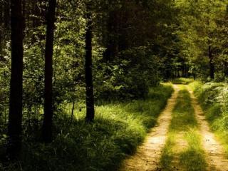 обои Дорога через лес фото