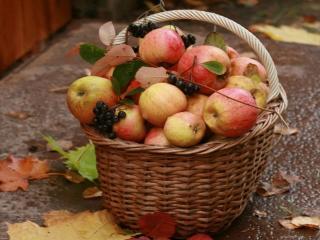 обои Корзинка с яблоками и чёрной рябиной фото