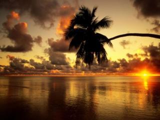обои Пальма на фоне заката фото