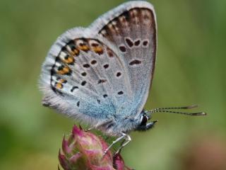 обои Серенькая бабочка фото