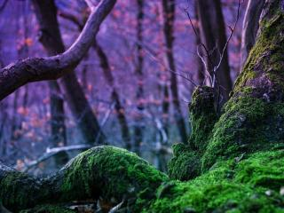 обои Мох на корне дерева фото