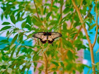обои В волшебном мире бабочек фото