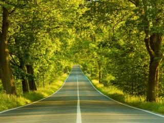 обои Зелёная дорога фото