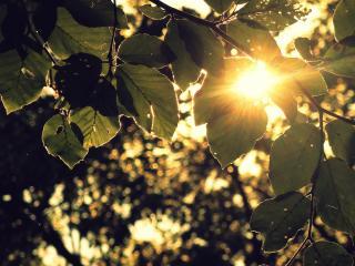 обои Яркий луч у листьeв  ветки фото