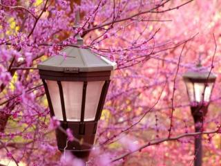 обои Весенние фонари фото