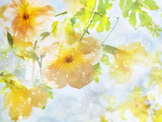 обои Весенняя нежность цветов фото