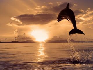 обои Высокий прыжок дельфина фото