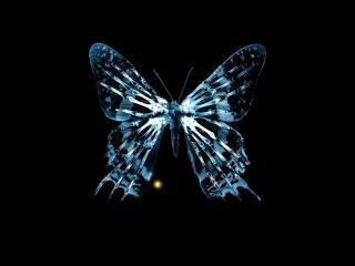 обои Бабочка-скелет на черном фоне фото