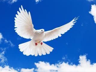 обои Белый символ мира в небе фото