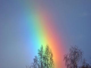 обои Весенняя радуга фото