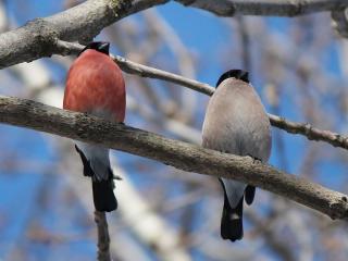 обои Встречаем весну фото
