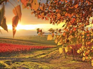 обои Поля и листва дерева на закатe ярком фото
