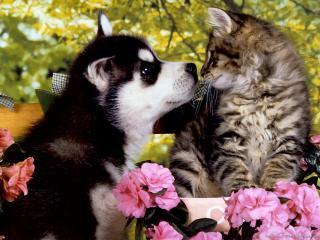 обои Собака пристает к котенку фото