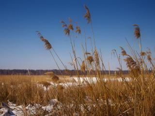 обои Остатки упрямой зимы фото