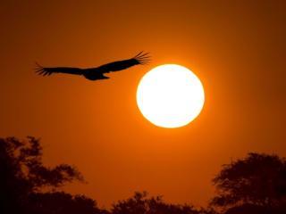 обои Полёт на закате дня фото